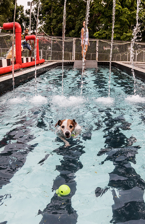 Singapore, Sunny Weights pet day care, swimming pool for fun or training , and other services for dogs