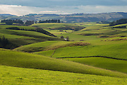 Lush green rolling hills in Southland, New Zealand