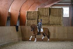 Scholtens Emmelie, (NED), Dorado<br /> Dressuurstal Ad Valk - Gorinchem 2015<br /> © Hippo Foto - Dirk Caremans