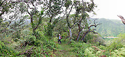 Hiking, Aiea, Oahu, Hawaii<br />