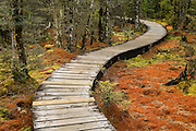 A meandering boardwalk along Day 1 of the Milford Track takes you through delicate wetlands covered with vivid mosses and lichen.