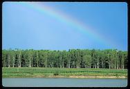 Rainbow hangs over grove of eucalyptus beside irrigation pond on rice farm near Pelotas, RS. Brazil