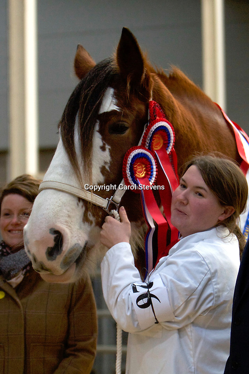 Charlotte Young with her own FORNETH LUCKY DAISY<br /> Sire  Collessie Whinhill President<br /> Dam  Blueton Princess<br /> Bred by Donnie Laing<br /> 1st Mate of Filly born in or before 2012<br /> OVERALL CHAMPION