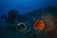 Godavaya Shipwreck Excavation, Sri Lanka--Assistant Field Director Staci Willis investigates a mouth and storage jar on the seabed.