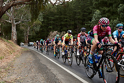 Maaike Boogaard (NED) in the bunch on Stage 1 of 2020 Santos Women's Tour Down Under, a 116.3 km road race from Hahndorf to Macclesfield, Australia on January 16, 2020. Photo by Sean Robinson/velofocus.com