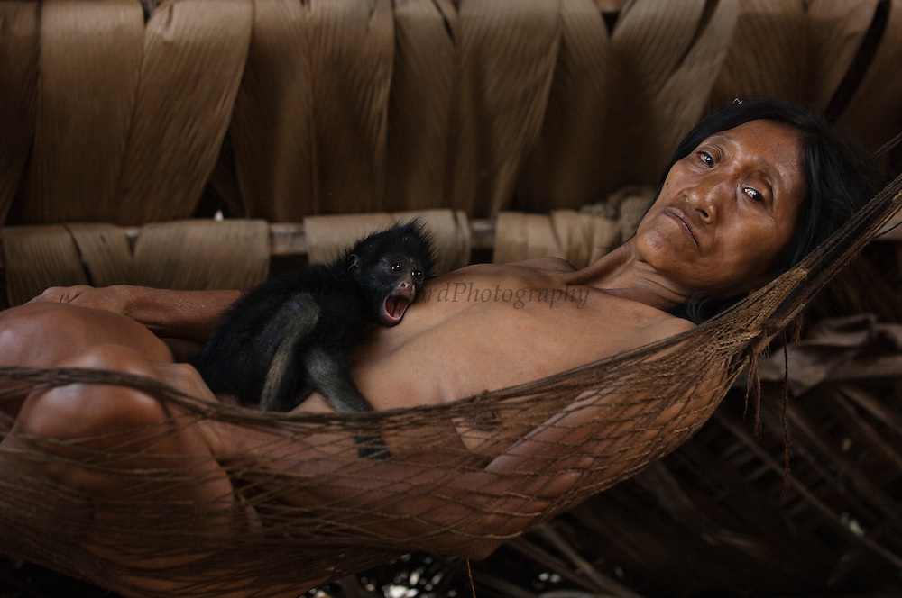 Huaorani Indian woman - Kano Yeti - with her pet White-bellied Spider Monkey (Ateles belzebuth)<br /> Amazon rainforest, ECUADOR.  South America<br /> They would have hunted the mother for meat and raized the baby as their pet<br /> This Indian tribe were basically uncontacted until 1956 when missionaries from the Summer Institute of Linguistics made contact with them. However there are still some groups from the tribe that remain uncontacted.  They are known as the Tagaeri &amp; Taromanani. Traditionally these Indians were very hostile and killed many people who tried to enter into their territory. Their territory is in the Yasuni National Park which is now also being exploited for oil.