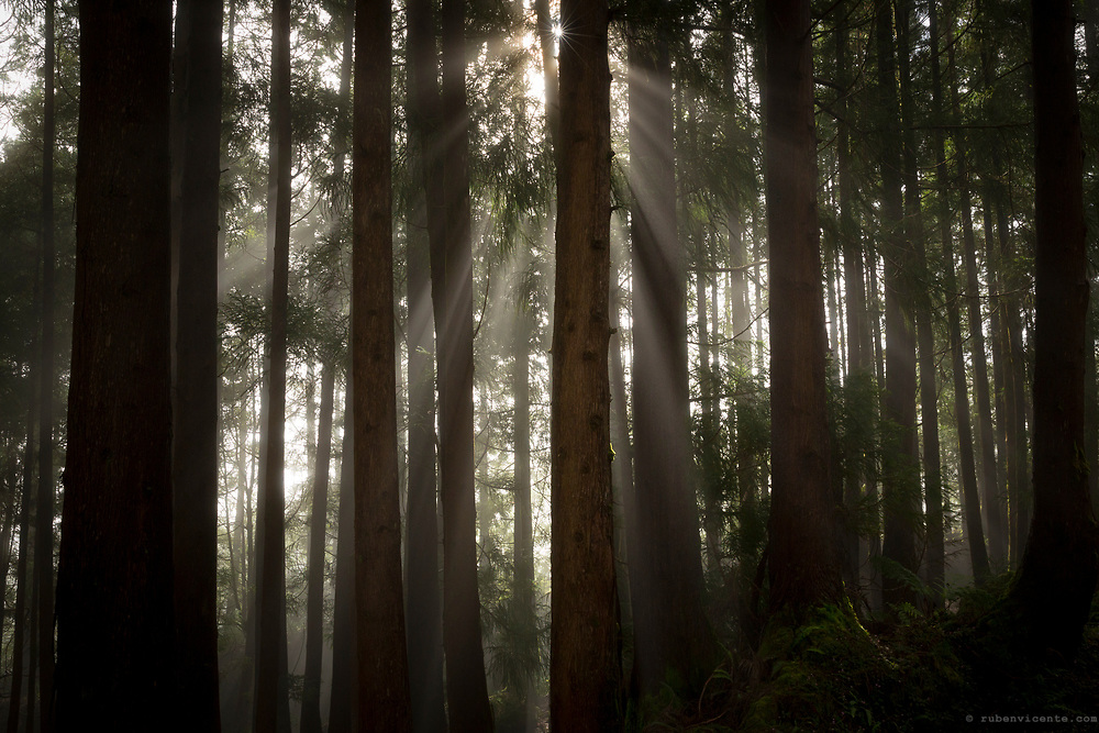 Sun shining between the mist in the forest. Terceira, Azores, Portugal