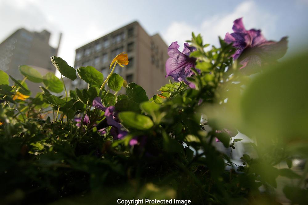 Flowers growing in downtown Columbus.