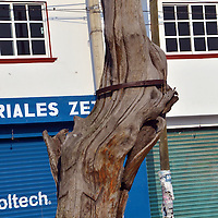 CHAPULTEPEC, Mexico.-  Autoridades del municipio de Chapultepec, tienen en pleno abandono las esculturas talladas en madera de árboles llorones, que tienen más de 10 años y que se están cayendo por falta de mantenimiento, se encuentran en el corredor cultural sobre la carretera Chapultepec Tianguistenco. Agencia MVT. José Hernández.  (DIGITAL)