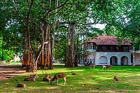 Spotted deer, Trincomalee, Sri Lanka.