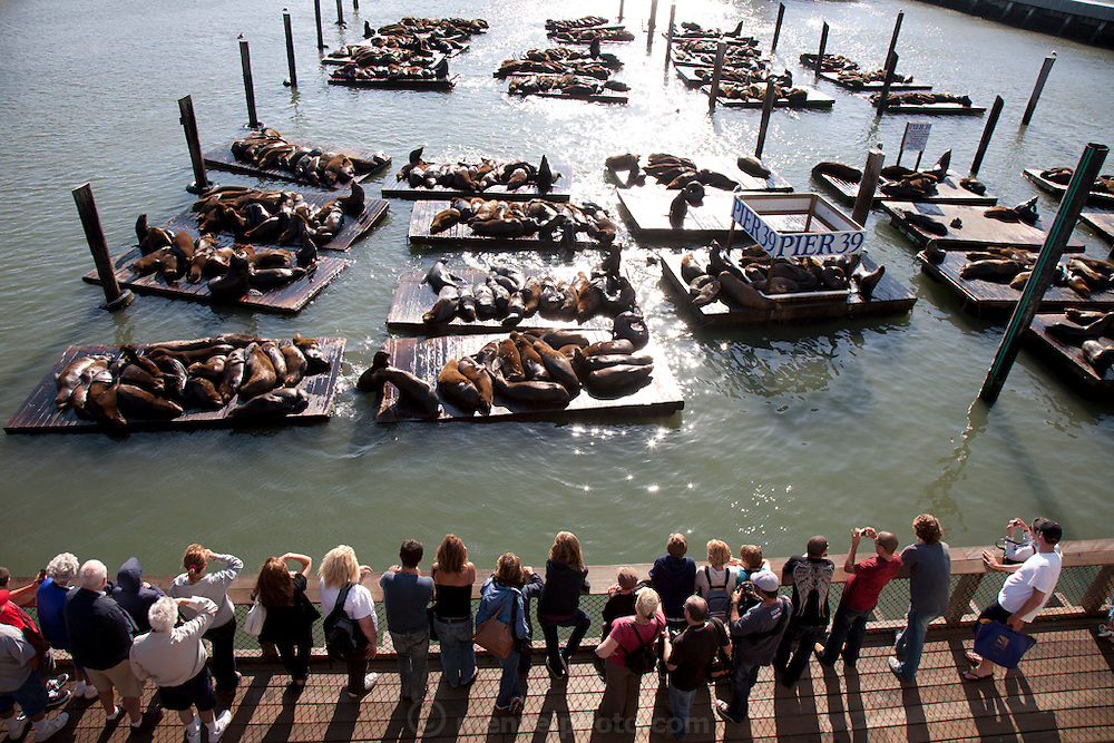 Sea Lions at Pier 39, San Francisco, California