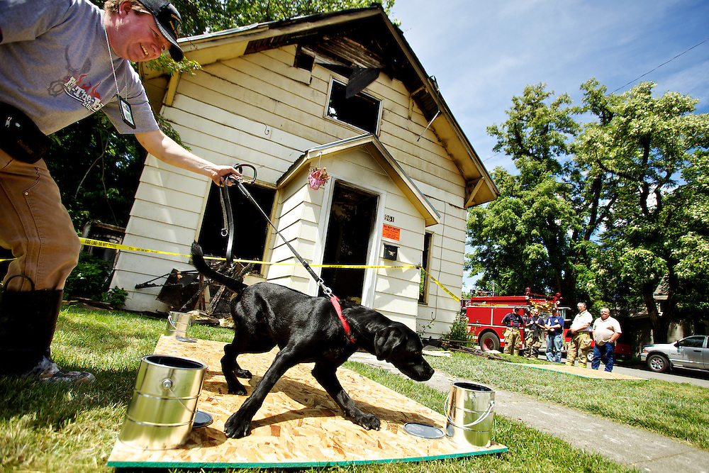 Rick Freier, the Spokane Valley Fire Department Assistant Fire Marshal, follows his dog Mako through samples collected from a fire scene being investigated as an arson Friday in Coeur d'Alene at the corner of Seventh Street and Elm Avenue. The Coeur d'Alene Fire Department responded to the vacated home at 4:26 a.m. where crews discovered the two-story residence with heavy fire showing from the main floor and extending to the second floor.