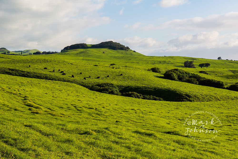 Verdant green grass pasture land near Waimea, Big Island, Hawaii