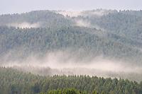 BOSCHI DI ABETI E BRUMA, ASIAGO (VI), ALTOPIANO DEI SETTE COMUNI, VENETO, ITALIA