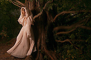 The Beauty and the Redwood  <br />