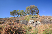Aliso Viejo Nature Area