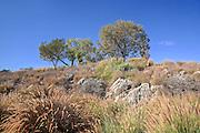 Aliso Viejo Nature Area