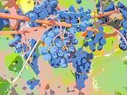 Galli vineyard merlot, art filter