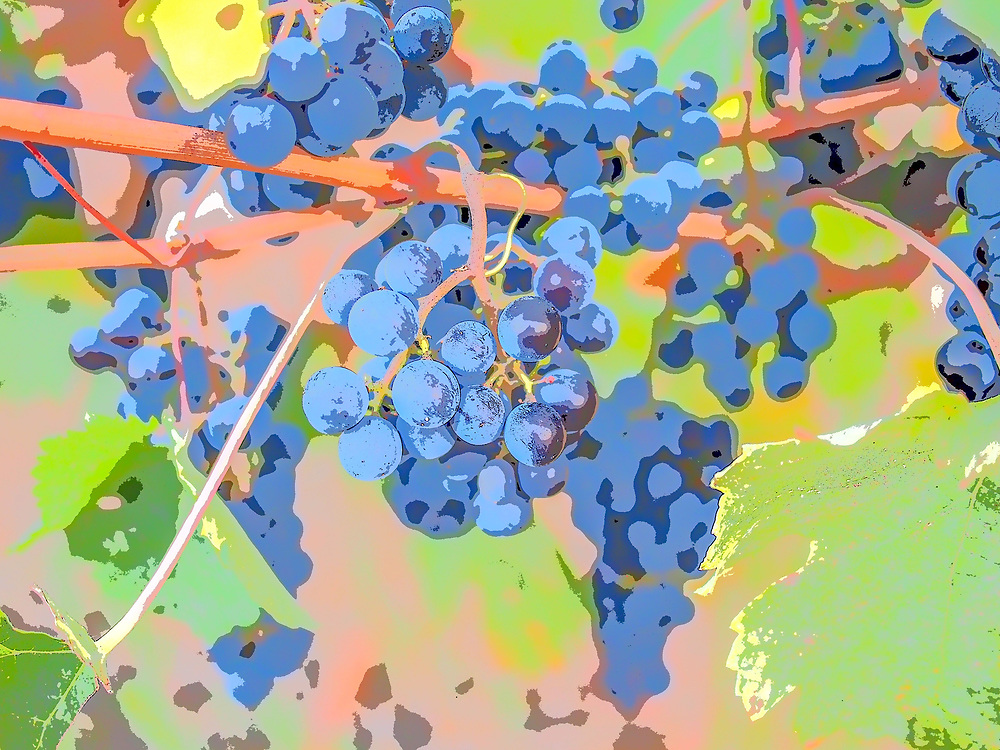 Galli vineyard merlot, art filter