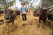 06 APRIL 2013 - SANPATONG, CHIANG MAI, THAILAND:     A farmer with his water buffalo before selling it at the market in Sanpatong, Chiang Mai province, Thailand. The buffalo market in Sanpatong (also spelled San Patong) started as a weekly gathering of farmers and traders buying and selling water buffalo, the iconic beast of burden in Southeast Asia, more than 60 years ago and has grown into one of the largest weekend markets in northern Thailand. Buffalo and cattle are still a main focus of the market, but traders also buy and sell fighting cocks, food, clothes, home brew and patent medicines.           PHOTO BY JACK KURTZ