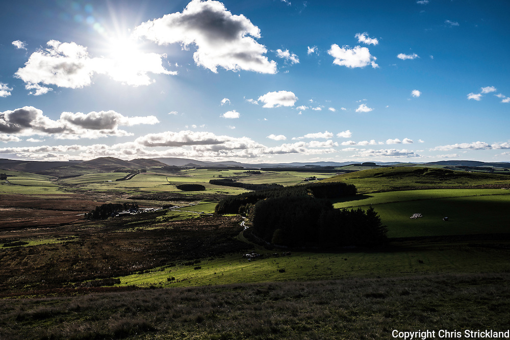Middlesknowes, Camptown, Jedburgh, Scottish Borders, UK. 1st November 2016. Bright sunshine over the Anglo Scot Border on the skyline as sheep are gathered on Midlesknowes Farm on the rolling hills near Jedburgh in the Scottish Borders. © Chris Strickland / Alamy Live News
