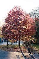 """9 Novembre, 2008. Brooklyn, New York.<br /> <br /> Un bambino corre davanti all'entrata del parco giochi di Prospect Park a Park Slope, Brooklyn, NY. Park Slope, spesso definito dai newyorkesi come """"The Slope"""", è un quartiere nella zona ovest di Brooklyn, New York, e confinante con Prospect Park.  Park Slope è un quartiere benestante che ha il maggior numero di nascite, la qualità della vita più alta e principalmente abitato da una classe media di razza bianca. Per questi motivi molte giovani coppie e famiglie decidono di trasferirsi dalle altre municipalità di New York a Park Slope. Dal punto di vista architettonico, il quartiere è caratterizzato dai brownstones, un tipo di costruzione molto frequente a New York, e da Prospect Park.<br /> <br /> ©2008 Gianni Cipriano for The New York Times<br /> cell. +1 646 465 2168 (USA)<br /> cell. +1 328 567 7923 (Italy)<br /> gianni@giannicipriano.com<br /> www.giannicipriano.com"""