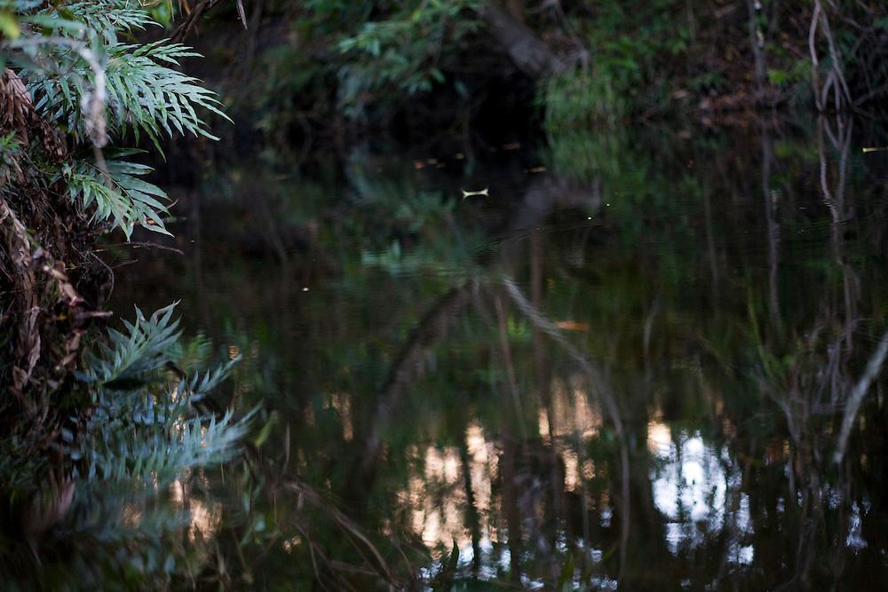 Santana do Riacho_MG, Brasil...Lago no Alto Palacio no Parque Nacional da Serra do Cipo...The lake in Alto Palacio in the Serra do Cipo National Park...Foto: JOAO MARCOS ROSA / NITRO