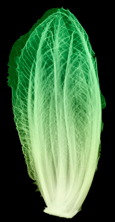 X-ray image of romaine lettuce (color on black) by Jim Wehtje, specialist in x-ray art and design images.