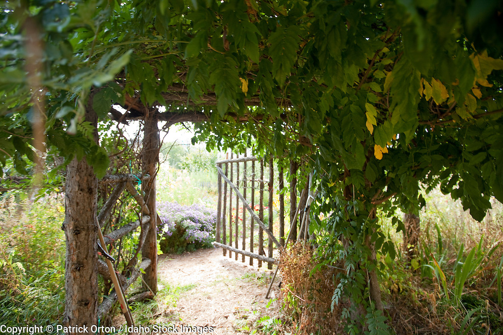 Vine hides secret entrance to amazing organic garden in Sandpoint, Id.