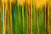Aspen trees reflected in a pond <br /> Elk Island National Park<br /> Alberta<br /> Canada