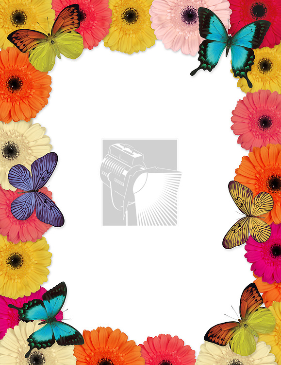 Springtime themed frame made of butterflies and Gerber daisies