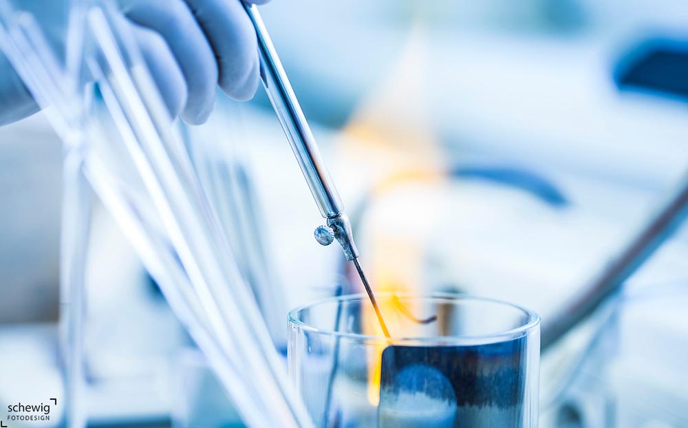 Weiterverarbeitung von Keimen, Bakteriologie, Labor, Krankenhaus, Pathologisches Institut, Österreich, Horn