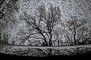 Raindrops, reflection of bare trees in car window, Oella, Maryland.