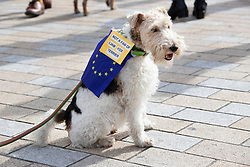 """© Licensed to London News Pictures. 07/10/2018. London, UK. Celeste sports a sign say she is not a fan of Liam Fox as she walks with pro-remain dog owners on a march to Parliament to demand a """"People's Vote"""" on the final Brexit agreement.  Photo credit: Peter Macdiarmid/LNP"""