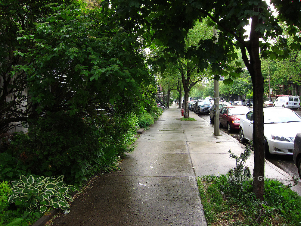 Lush green of June day, after a shower, Plateau area of Montreal.