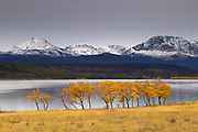 The first snow of the winter caps the mountains surrounding St. Mary Lake as the cottonwood trees still show their golden fall color. St. Mary Lake is the second-largest lake in Glacier National Park, Montana.