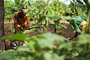 Sweet potato farmers Mwanaidi Ramadhani (L) and Maria Mchele (R) work on a farm run by a local farmer's group in the village of Mwazonge, roughly 30km southwest of Mwanza, Tanzania on Sunday December 13, 2009.