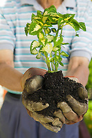 Senior Man Holding Plant