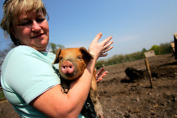 UK ENGLAND WILTSHIRE CHITTERNE 15APR07 - Theresa Mangan (47) holds a Sandy Black piglet at the Paradise Pig Farm run by Tony York and Carron McCann. Under the 'Pig Perfect' banner the two run a joint farm specialising in rare breeds and offer courses on pig keeping...jre/Photo by Jiri Rezac..© Jiri Rezac 2007..Contact: +44 (0) 7050 110 417.Mobile:  +44 (0) 7801 337 683.Office:  +44 (0) 20 8968 9635..Email:   jiri@jirirezac.com.Web:    www.jirirezac.com..© All images Jiri Rezac 2007 - All rights reserved.