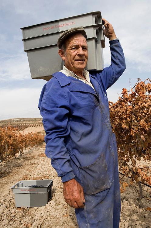 Harvest day in October. Ribera del Duero (Spain)<br /> <br /> Vendimia en un vi&ntilde;edo de Ribera del Duero en el mes de Octubre.