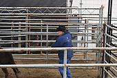 Sat Steer Roping