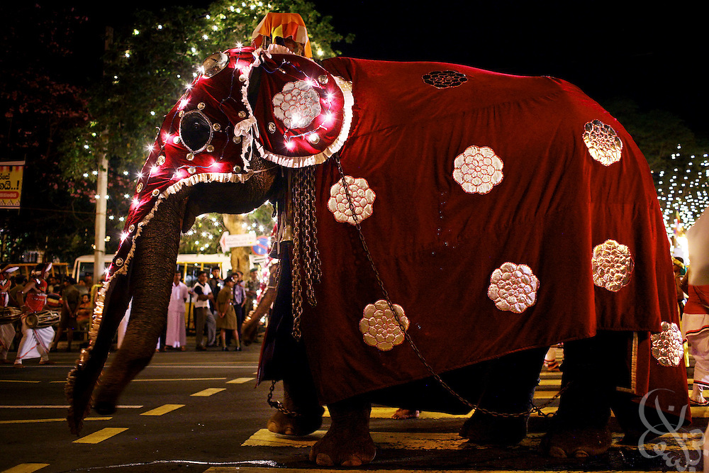 An elephant wearing decorated garments takes part in the traditional Esala Perahera festival procession August 12, 2008 in Kandy, Sri Lanka. The Esala Perahera is an annual grand Buddhist festival with roots dating back to the 3rd century B.C. in which the sacred tooth relic of Buddha is paraded through the streets along with ornately costumed elephants, dancers flag bearers and drummers.