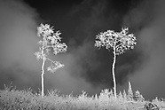 Treescapes-black and white