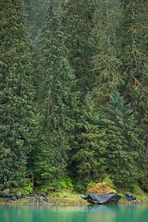Forest scene in Scenery Cove, Thomas Bay, Southeast Alaska.