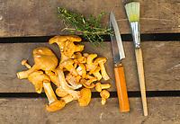Chanterelle mushroom.