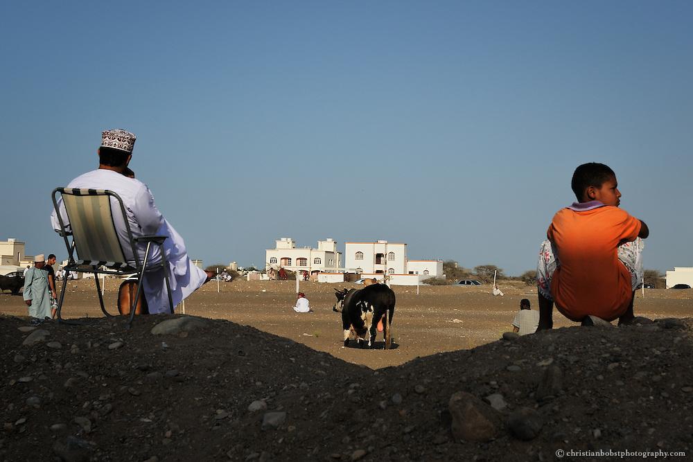 Bull fight in Barka, Oman 2011