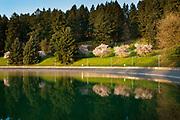 Spring blossoms frame Reservoir 5, Mount Tabor Park, Portland, Oregon USA.