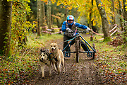 Competitor in 2 dog rescue class during the WSA Dryland World Championship 2019 at Firle Country Estate in the South Downs National Park, Lewes, Sussex, United Kingdom on 17 November 2019.