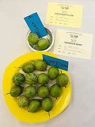 © Licensed to London News Pictures.04/08/15<br /> Egton, UK. <br /> <br /> <br /> A selection of gooseberries is displayed after winning two categories including champion berry during the annual Egton Gooseberry Show. <br /> There are only two Gooseberry societies left in the country. One in Cheshire and one at Egton in North Yorkshire. The annual show in Egton uses traditional Avoridupois scales to measure the weight of the berries and members of the society are fanatical about trying to grow the best berries each year. <br /> <br /> Photo credit : Ian Forsyth/LNP
