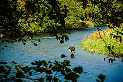 A fisherman on the River Tweed near Innerleithen, Scottish Borders<br /> <br /> (c) Andrew Wilson | Edinburgh Elite media